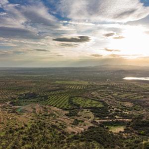 岡山県倉敷市のチュニジア産オリーブオイルは有機栽培(オーガニック栽培)のエキストラバージン