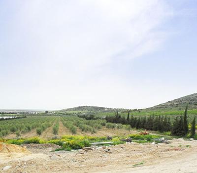 イーグルオリーブオイルの農場(チュニジア産の高級品質)